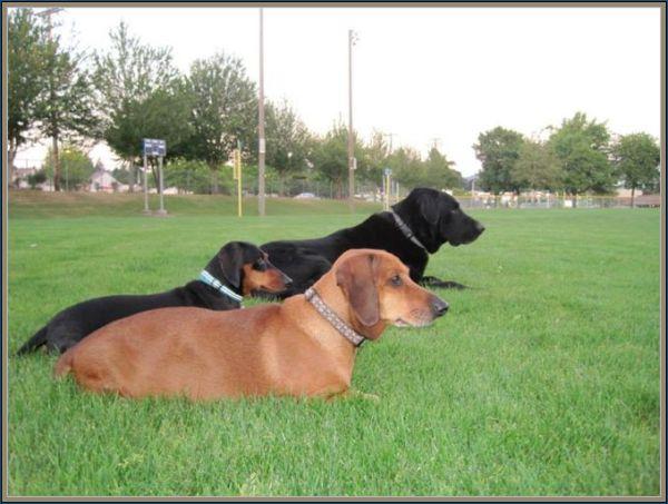 Obie vivendo uma vida normal com seus dois companheiros