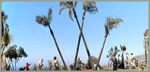 """O grupo de aventureiros demoraram para entender que o """"W"""" era formado pelas palmeiras."""
